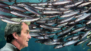 Fernando Simón y la conducta de las sardinas