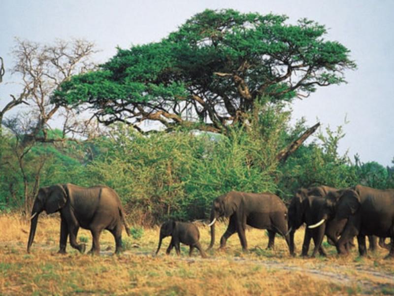 Un cazador ilegal muere aplastado por una estampida de elefantes en Sudáfrica