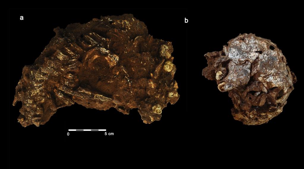 Hallan el primer enterramiento humano de África - Vozpópuli