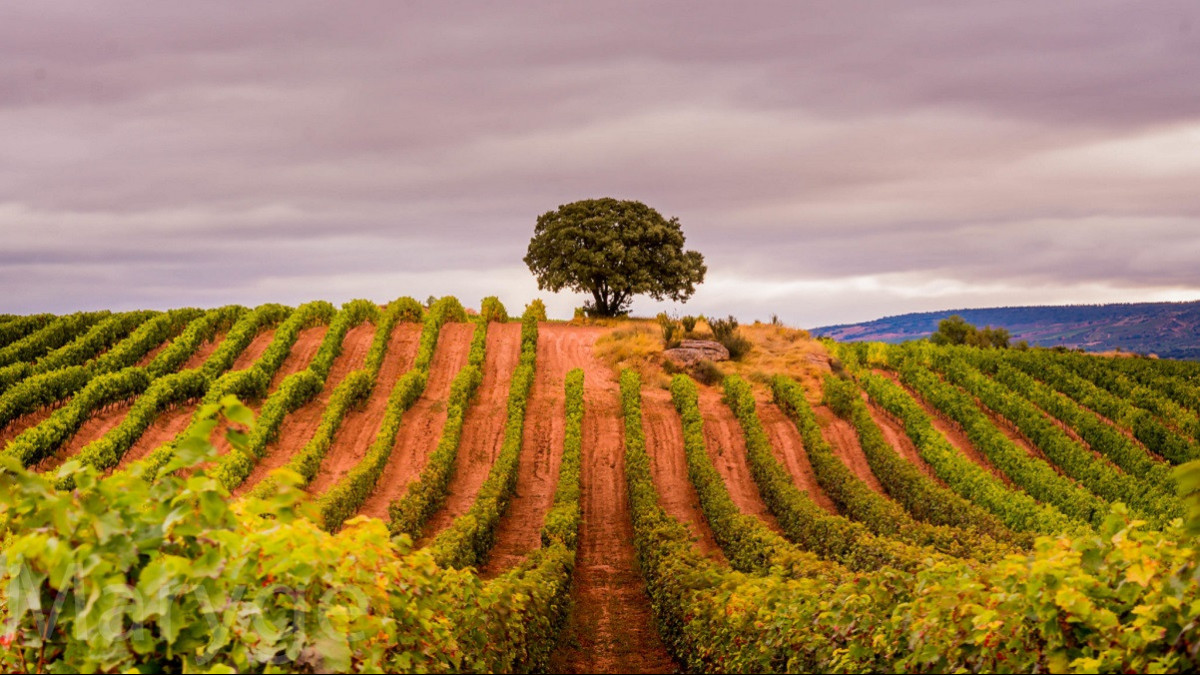 Los lugares imprescindibles que hay que visitar en La Rioja