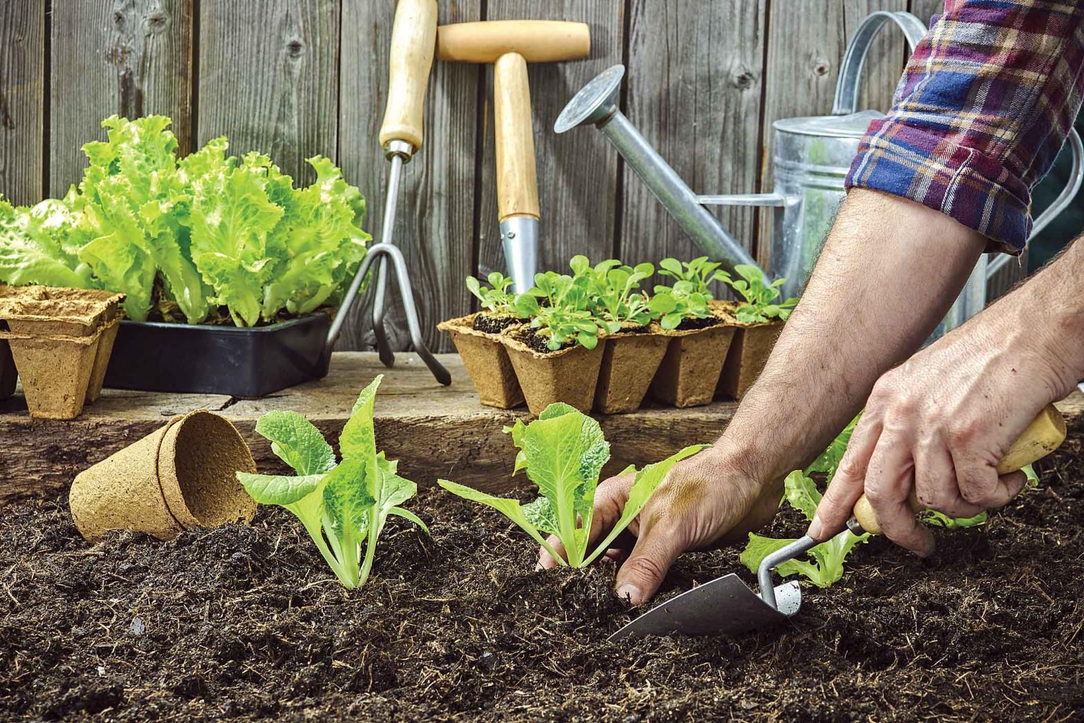 Qué plantar en nuestro huerto en junio