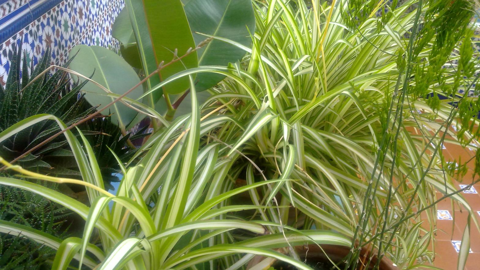 Cómo hacer que tus plantas sobrevivan al calor de agosto