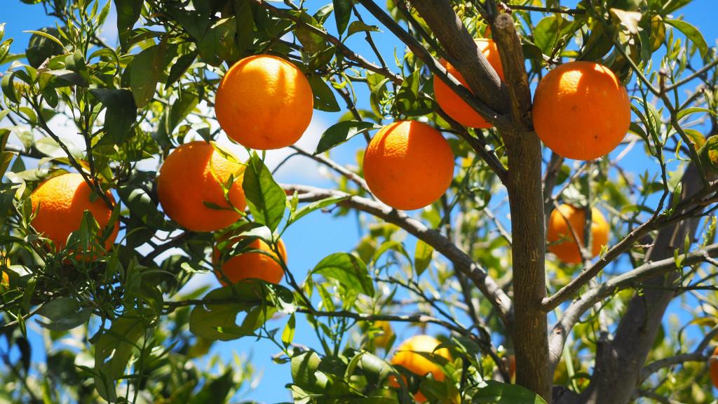 Madera de narananjo para paella