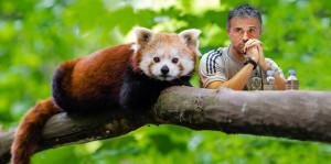 Luis Enrique y el salero del panda rojo