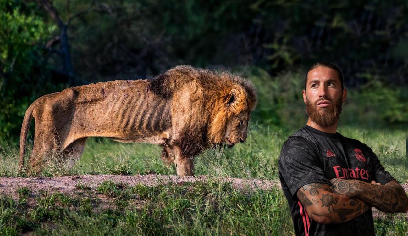 Sergio Ramos y el crepúsculo del león
