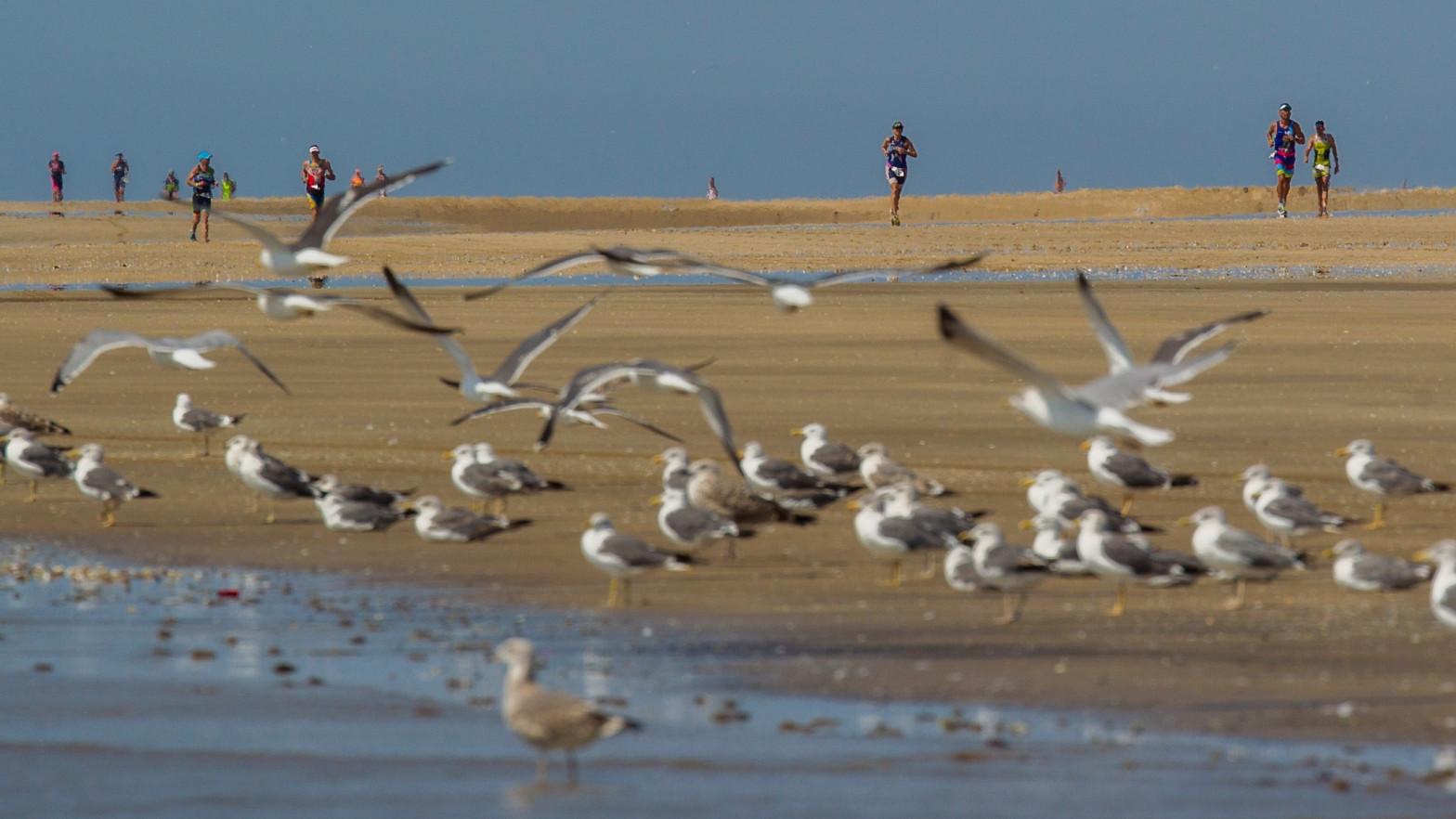 La Justicia europea condena a España por no proteger el humedal de Doñana