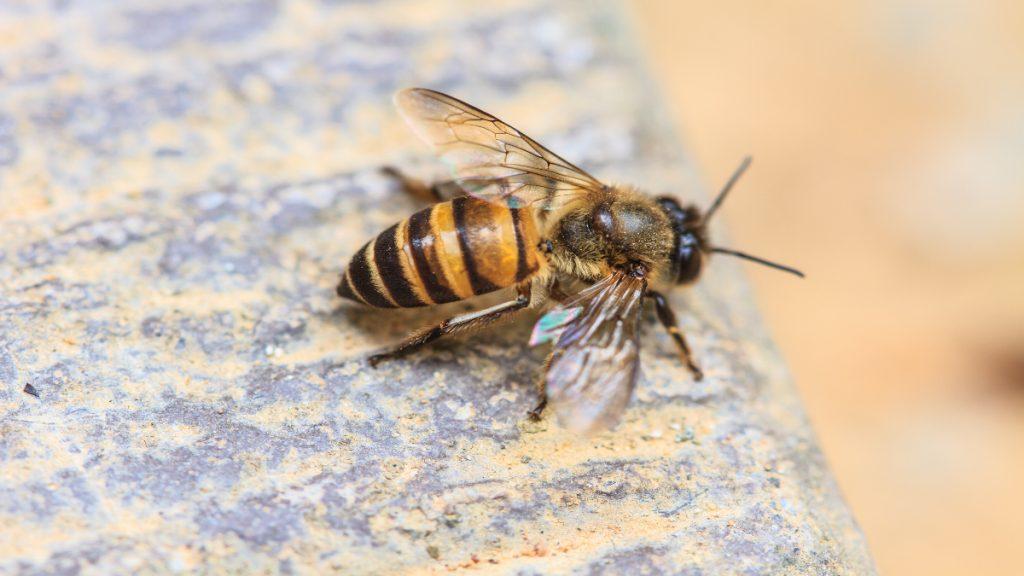 abeja picadura insecto verano
