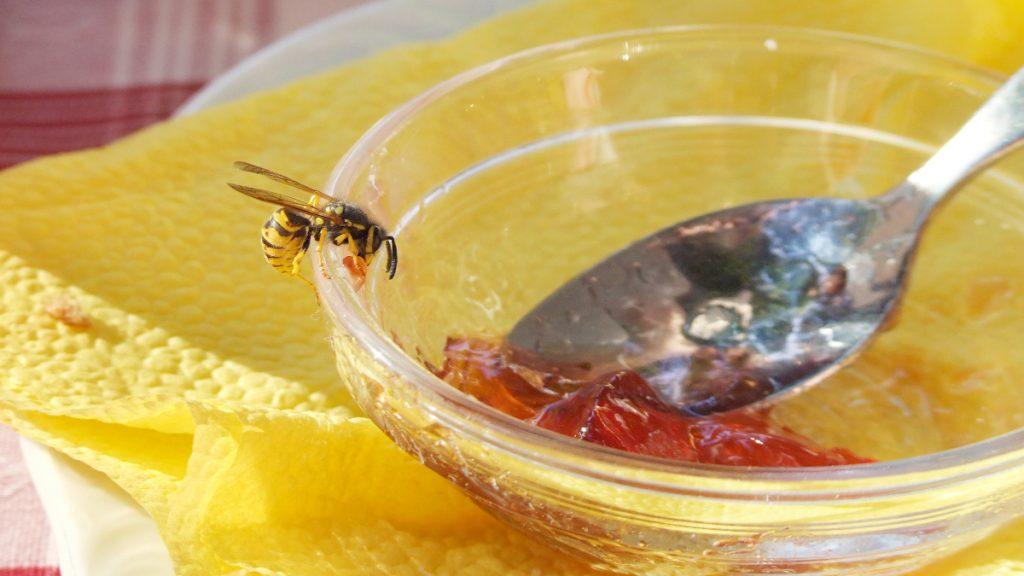 picadura insectos avispas verano